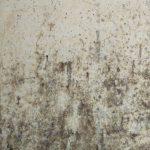 Wat te doen als je huis last heeft van schimmel